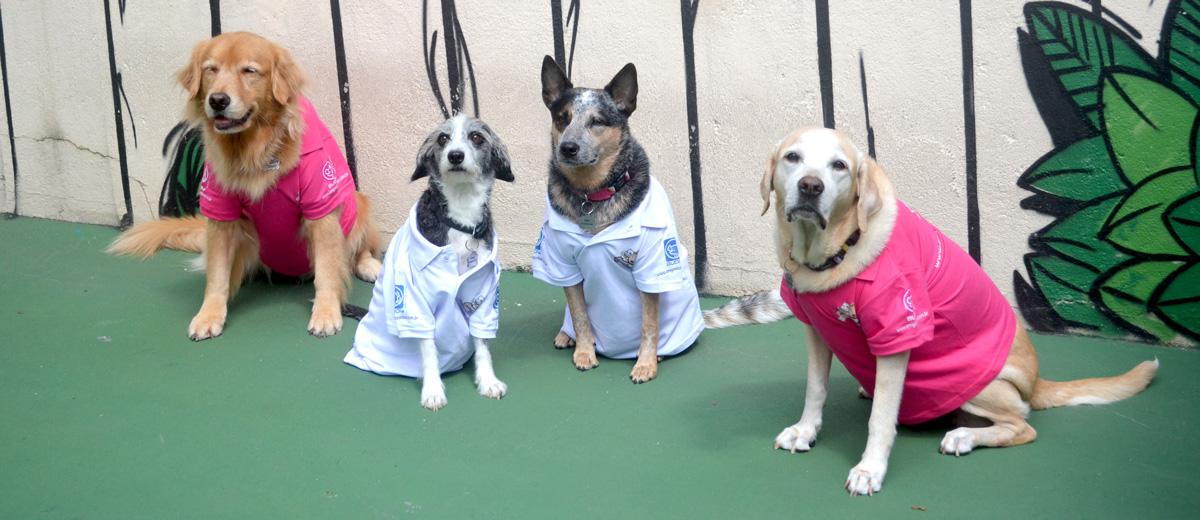 Equipe Canina já a postos. Falta você para completar a equipe de humanos!