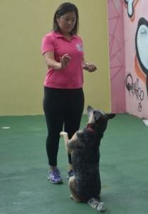 Adestramento Animal