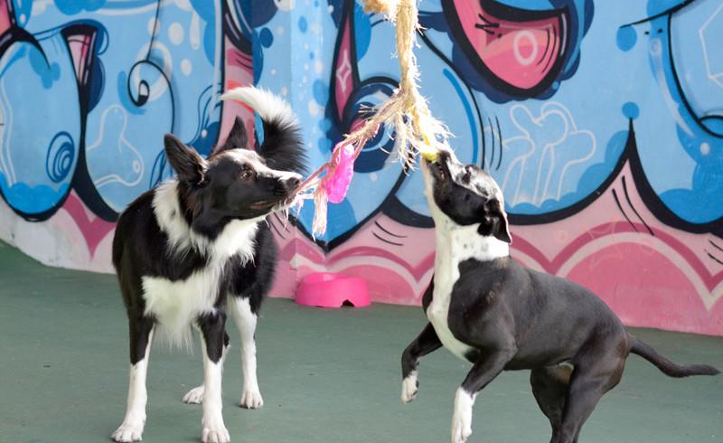 Atividades com Adestradores e Recreadores Treinados em Comportamento Animal.