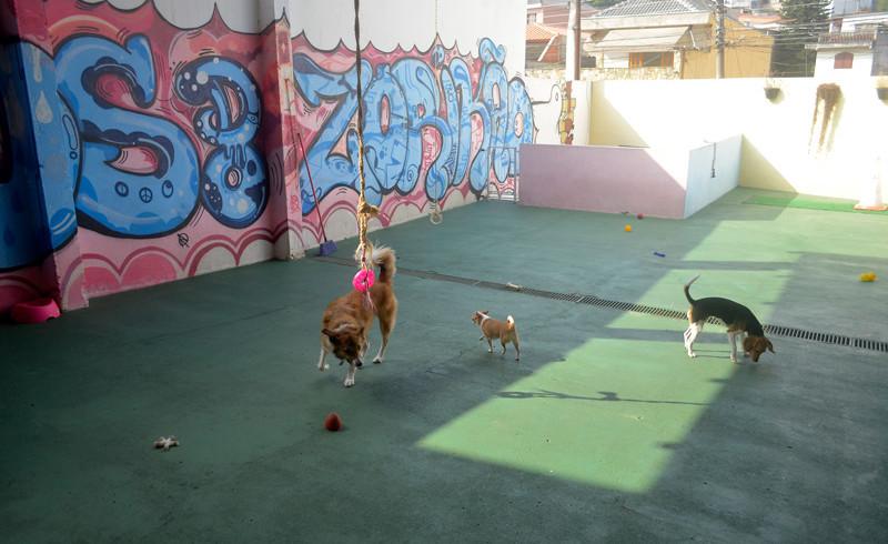 Cães 100% soltos, com áreas cobertas com telhas de cerâmica para controle de temperatura.