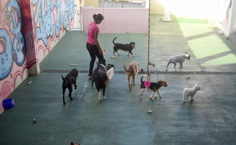 Todas as atividades são planejadas para entreter e socializar os animais.