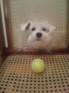 cachorros e mobilhas