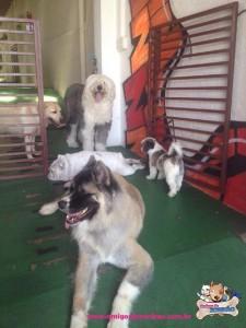 Recepção na Creche para Cachorros