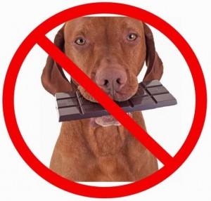Não de chocolate para seu cão