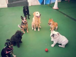 Treino Comandos Básicos Adestramento Cães