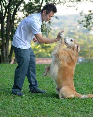 Adestramento de Cães e Gatos