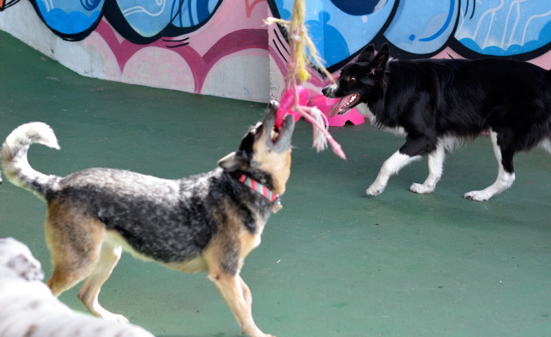 Curso Recreador Cães
