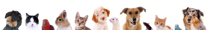 Adestramento de Animais