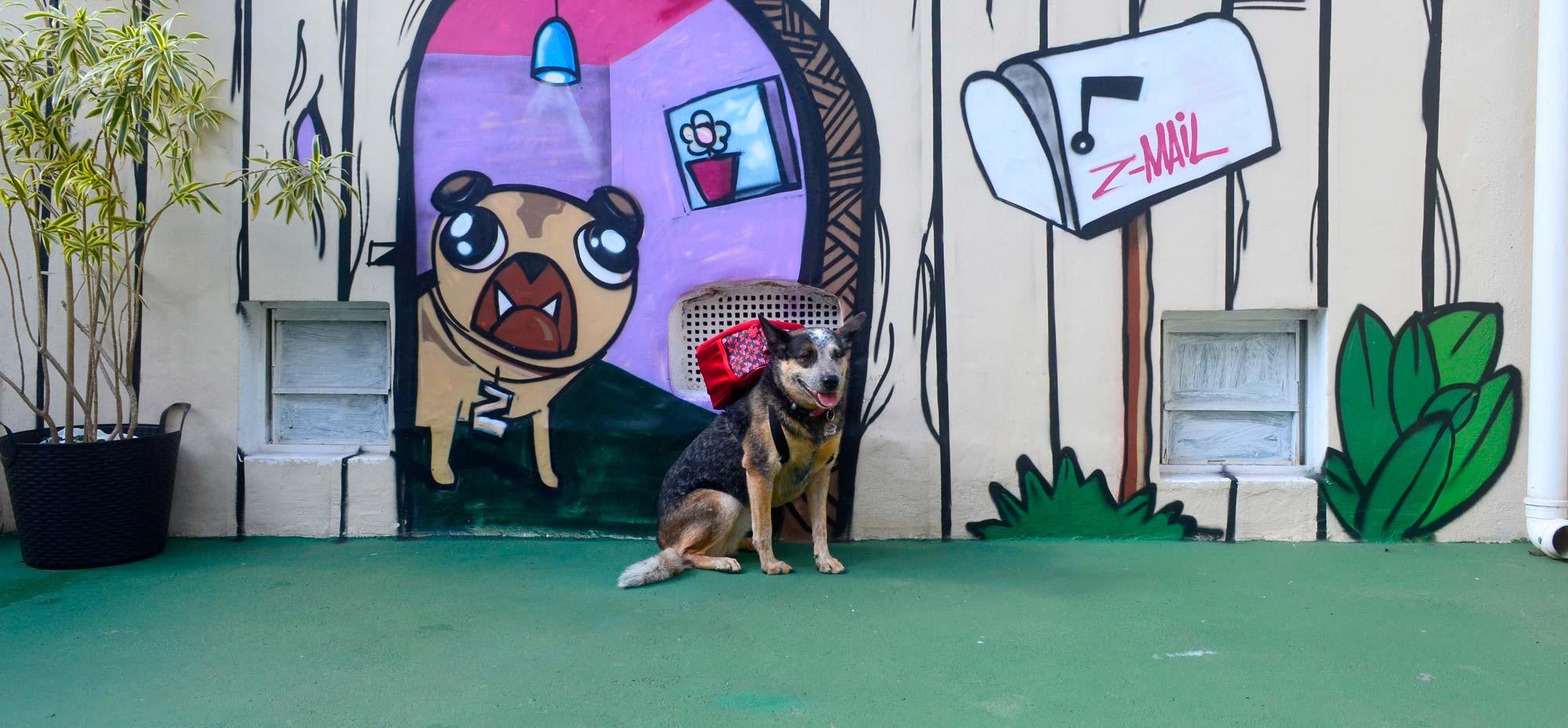 Creche para Cachorros, Daycare para cães