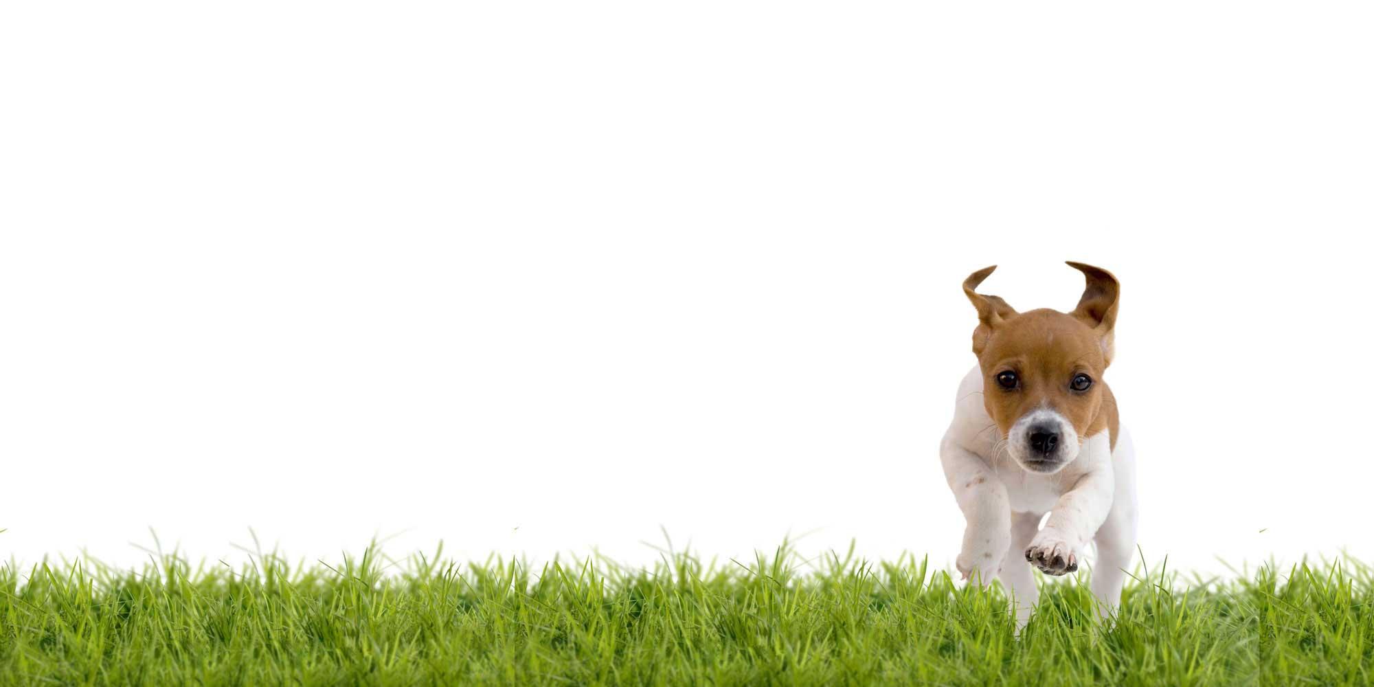 slide-puppy-class3
