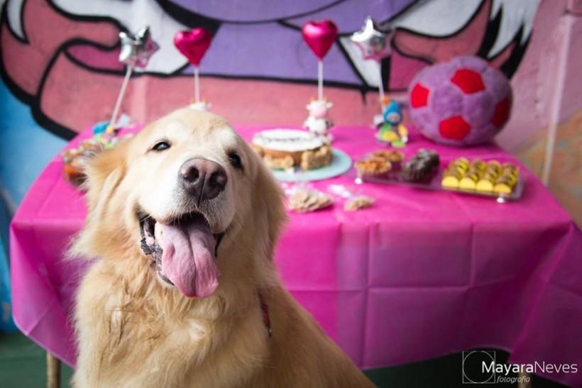 Dia das Crianças: Amigos do Zorikão, Cozinha de Pet e a Mayara Neves
