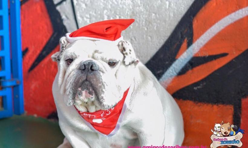 Natal 2015 no Hotel para Cachorros