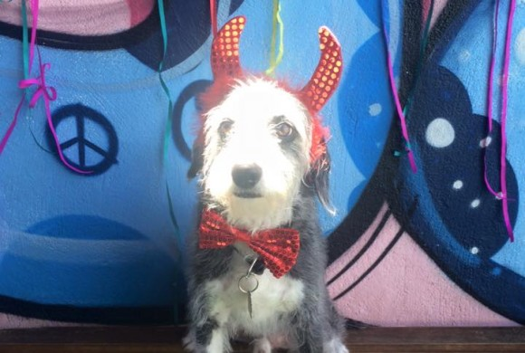 Carnaval 2016 – Hotel para Cachorros