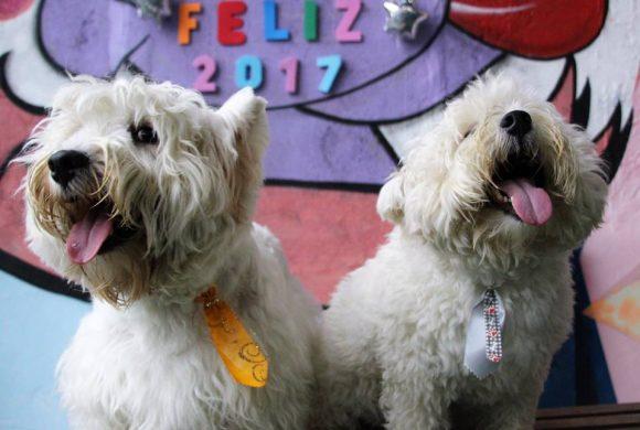 Feliz 2017 – Reveillon no Hotel para Cachorros Amigos do Zorikão