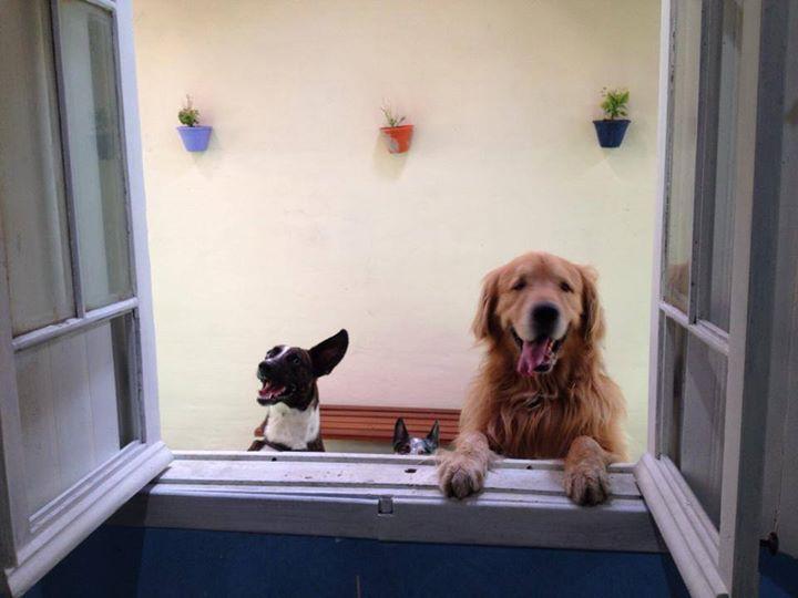 O cão e o Bebê