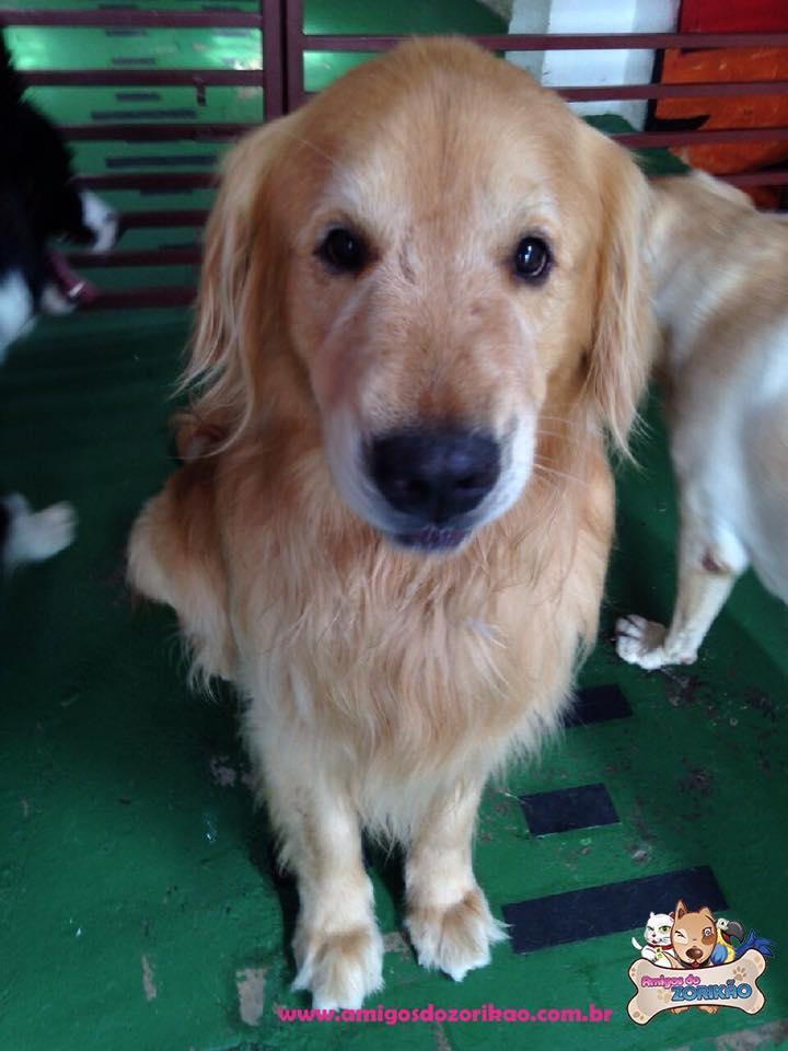 Férias Hotel para Cachorros Amigos do Zorikao