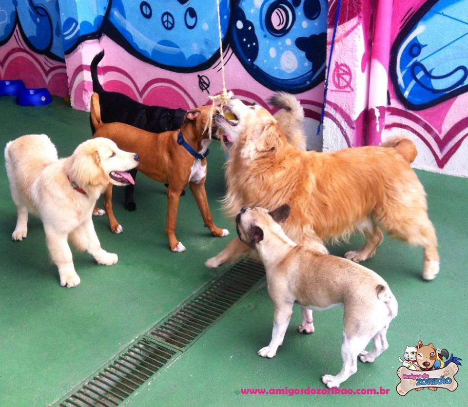 Brincadeiras em Grupo – Creche para cachorros