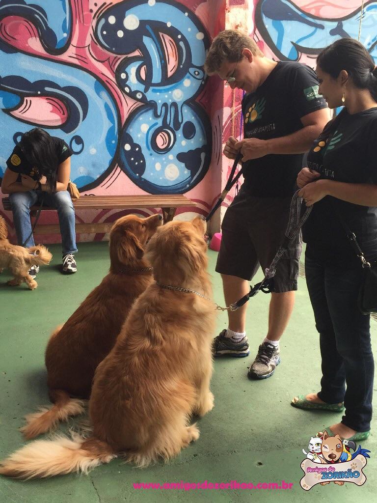 Cão Terapeuta na Amigos do Zorikão