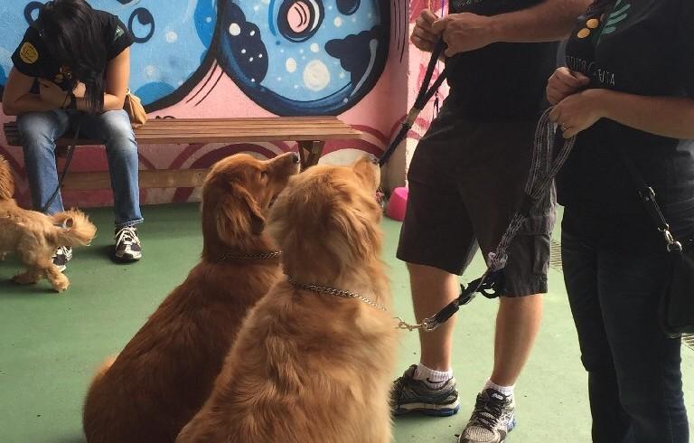 Cão Terapeuta Fevereiro 2015
