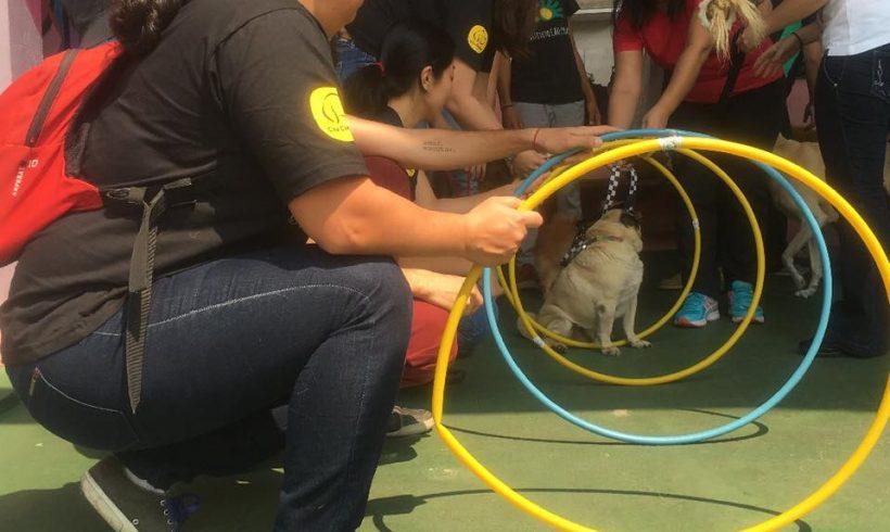Encontro Cão Terapeuta – Setembro 2016