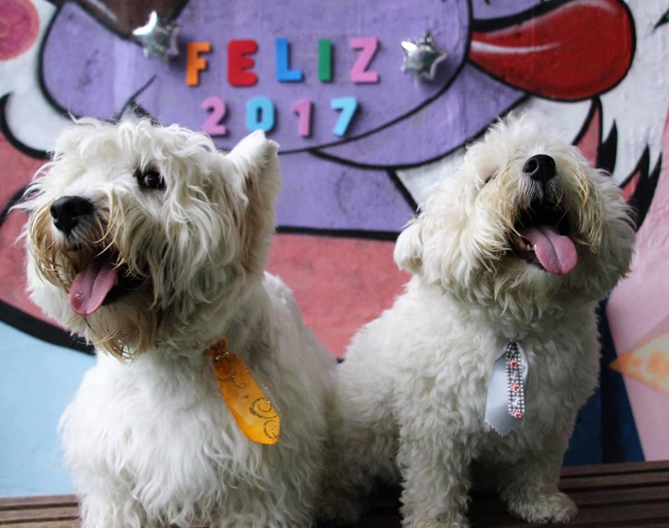 Ano Novo no Hotel para Cachorros Amigos do Zorikão